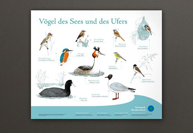 NPWH_Vogeltafeln_FischundBlume_01