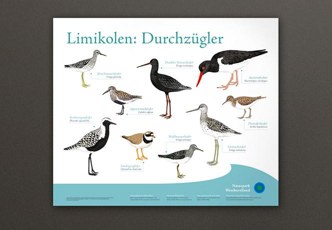 NPWH_Vogeltafeln_FischundBlume_05