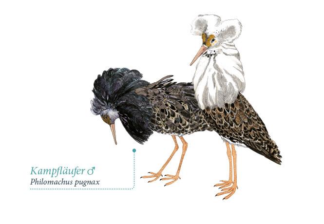NPWH_Vogeltafeln_FischundBlume_08