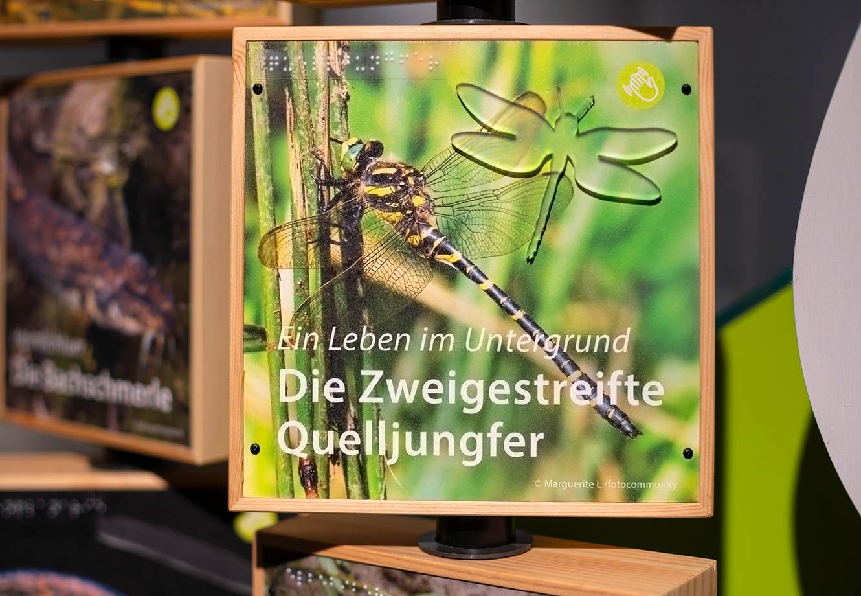 Naturparkzentrum_Hoher_Flaeming_Ausstellung_FischundBlume_15