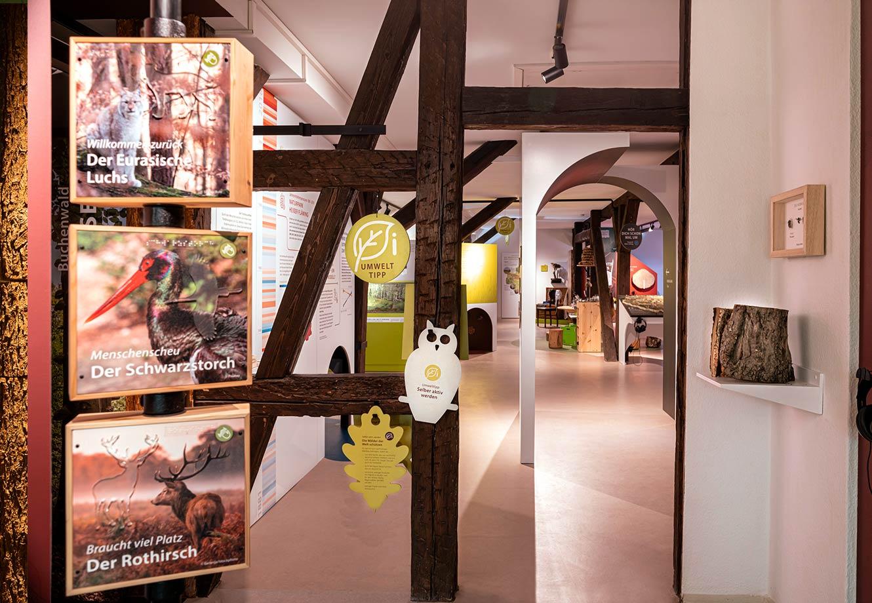 Naturparkzentrum_Hoher_Flaeming_Ausstellung_FischundBlume_19